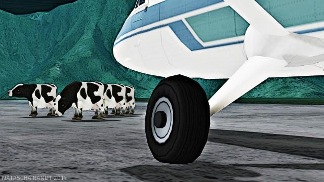 cows1_002