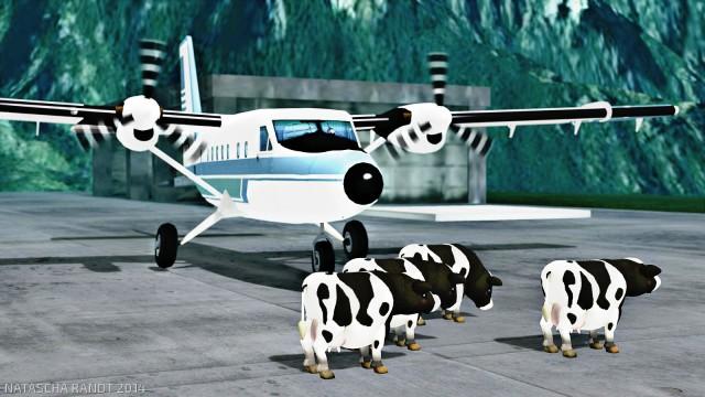cows1_004