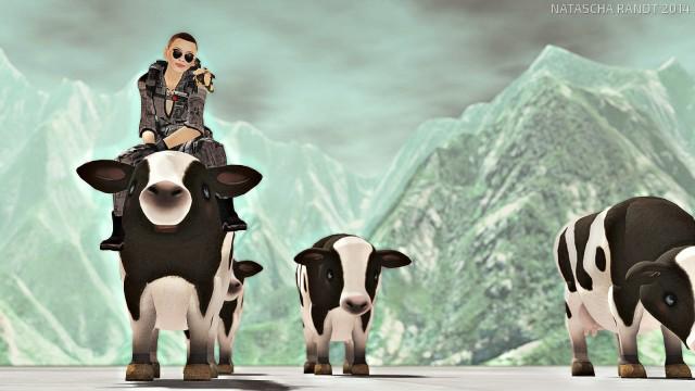 cows1_007