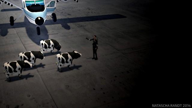 cows1_008